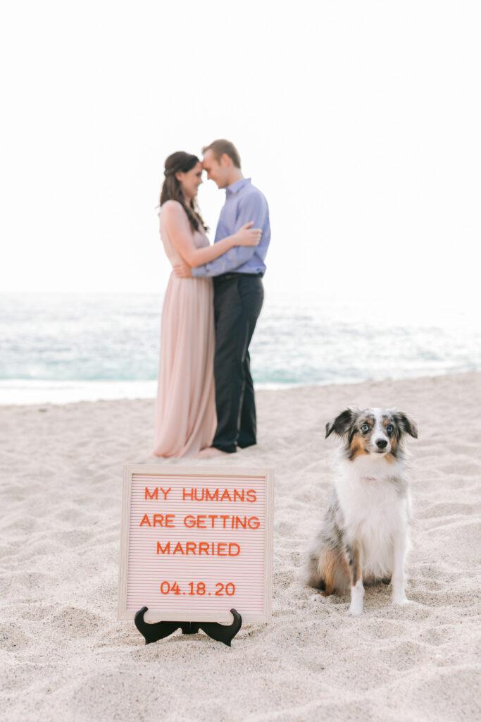 couple engagement dog