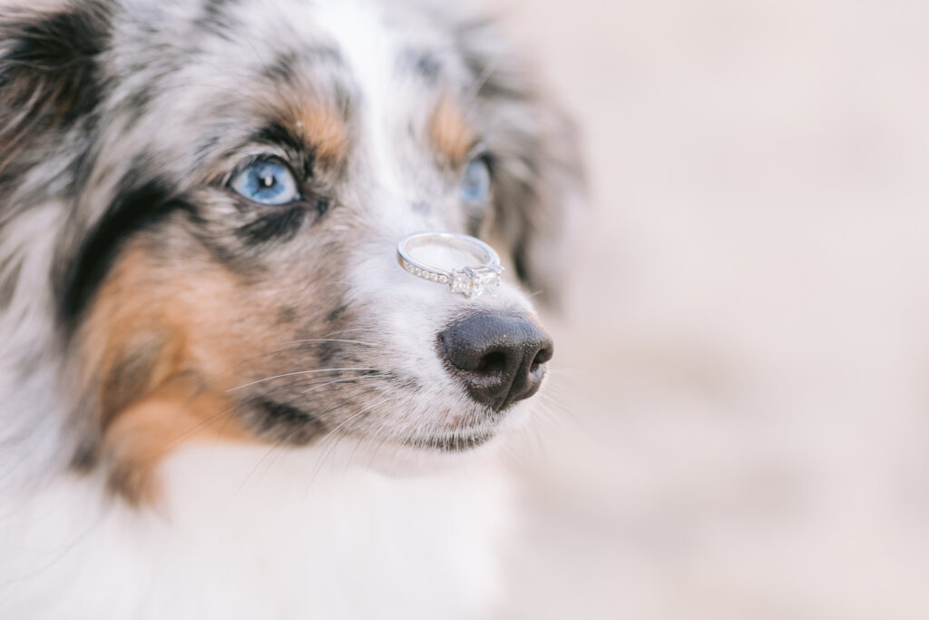 dog with ring on nose